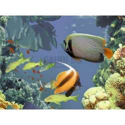 Декор Emma Kids 11 (рибки в едър план) 25x33