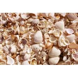 Декор Set Shells 2 части 40x60
