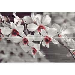 Decorado Perfume 2 броя 20x60